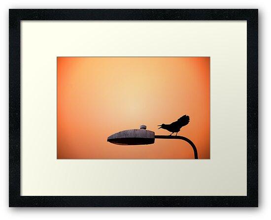 Sunset Bird by Donncha O Caoimh