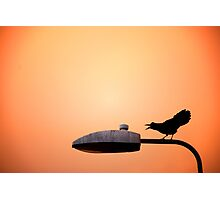 Sunset Bird Photographic Print
