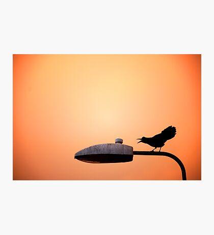 Sunset Bird Photographic Print