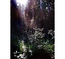 Forest Glade Photographic Print