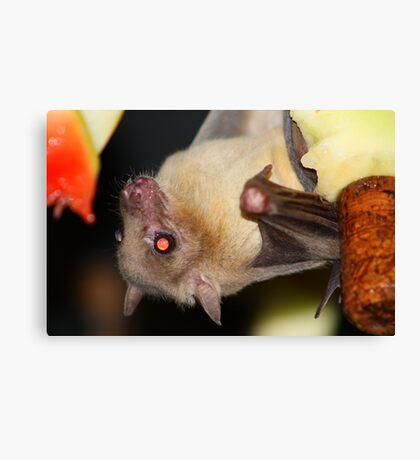 Fruit bat....... Canvas Print