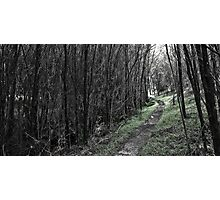 The Green Path Photographic Print