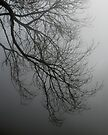 Branches in the mist by Patrick Morand