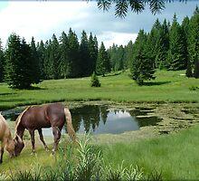 890-Equine Prairie by George W Banks