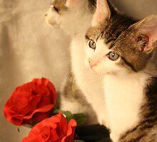 Kitten Romance by KBdigital