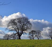 Cloud Blossom on Winter Trees.............Somerset UK by lynn carter