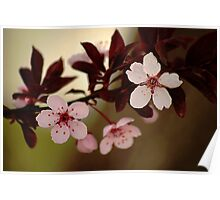 Plum Blossoms - Green Background Poster