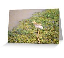 Nature - Looking for something Greeting Card