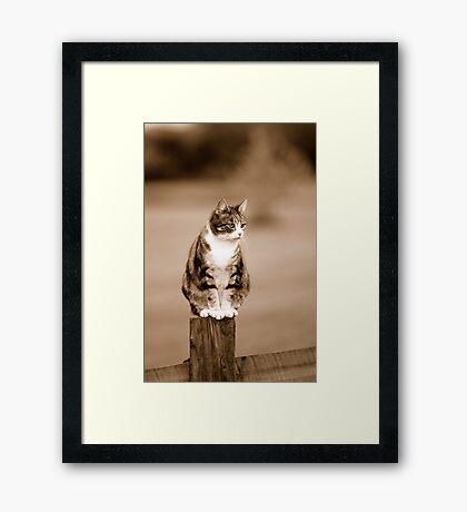 Mew Framed Print