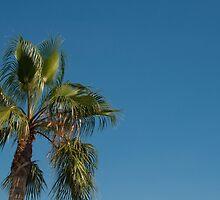 Palm Dreams by RecklessTimes