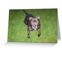 Handsome Staffordshire bull-terrier Greeting Card