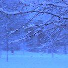 Winter Blues by Jennifer Darrow