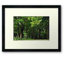 Could Pooh Bear be far behind? Framed Print