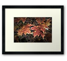 Rusted Maple Framed Print