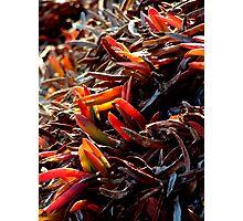 California vegetation Photographic Print