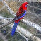 PhotoImpression :: Crimson Rosella 2 by Imageo