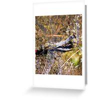 a mating pair of dragon flys  Greeting Card