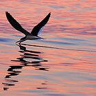Sunset Skimmer by LAmBChOp