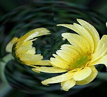 Yellow Daisy in a Bubble  by Judy Vincent