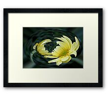 Yellow Daisy in a Bubble  Framed Print