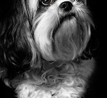 Portrait of Tam by Robert Mullner