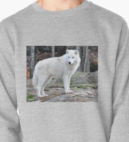 Arctic Wolf - Québèc, Canada Pullover