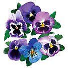 Circle of Purple Pansies by Susan Savad