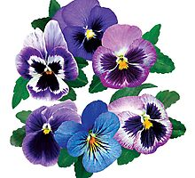 Circle of Purple Pansies by Susan Savad