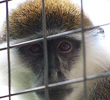 Captivity......... (Please read description before comment) by jdmphotography