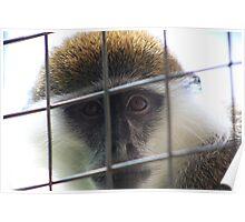 Captivity......... (Please read description before comment) Poster