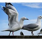 seagulls picnic by ingridewhere