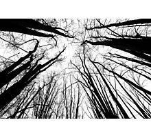 The Gathering - Winter Trees Photographic Print