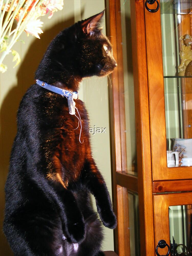 mere cat by ajax