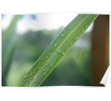 A leaf with water droplets Poster