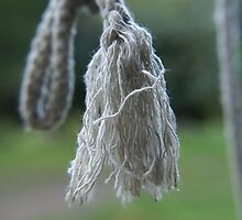 Hanging Rope by Ajmdc