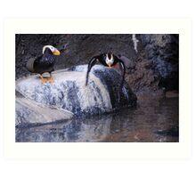 puffin bird Art Print