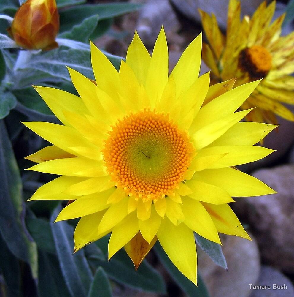 paper daisy by Tamara Bush