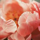 Paeonia #7 by ALICIABOCK