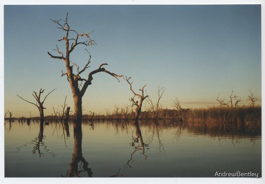 Quot Kow Swamp Tree Quot By Andrewbentley Redbubble