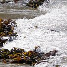 In with the tide..  by PinkLady