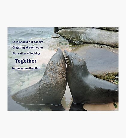 Seal Love: In the Same Direction Photographic Print
