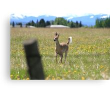Here Comes Bambi Canvas Print