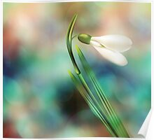 Dreamy Snowdrop Poster