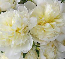 White Peonies by Tom  Reynen