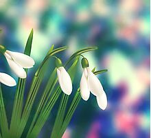 Dreamy Snowdrop 4 Photographic Print