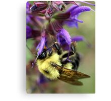 Upside Down Bee Canvas Print