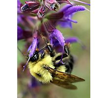Upside Down Bee Photographic Print