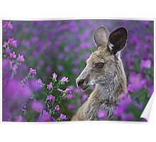 Roo in flowers. Poster