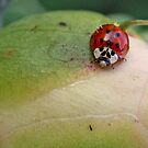 Red Beetle by BigD