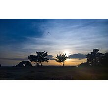 Tree Sunset Photographic Print